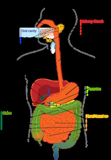 【国試難問の解説・消化器内科・第112回医師国家試験C51-53】なぜ肝性脳症になるのか。考え方をマスターしよう
